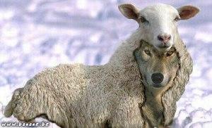 111-loup-mouton